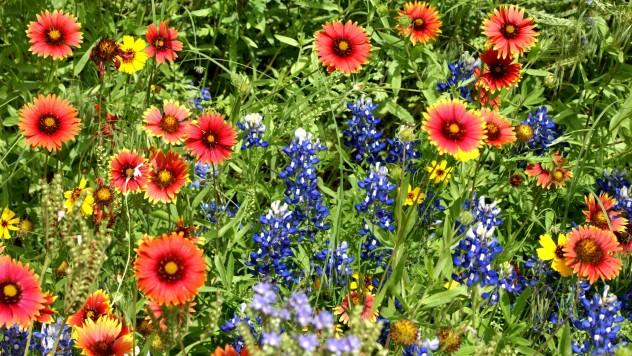 meadow-of-flowers